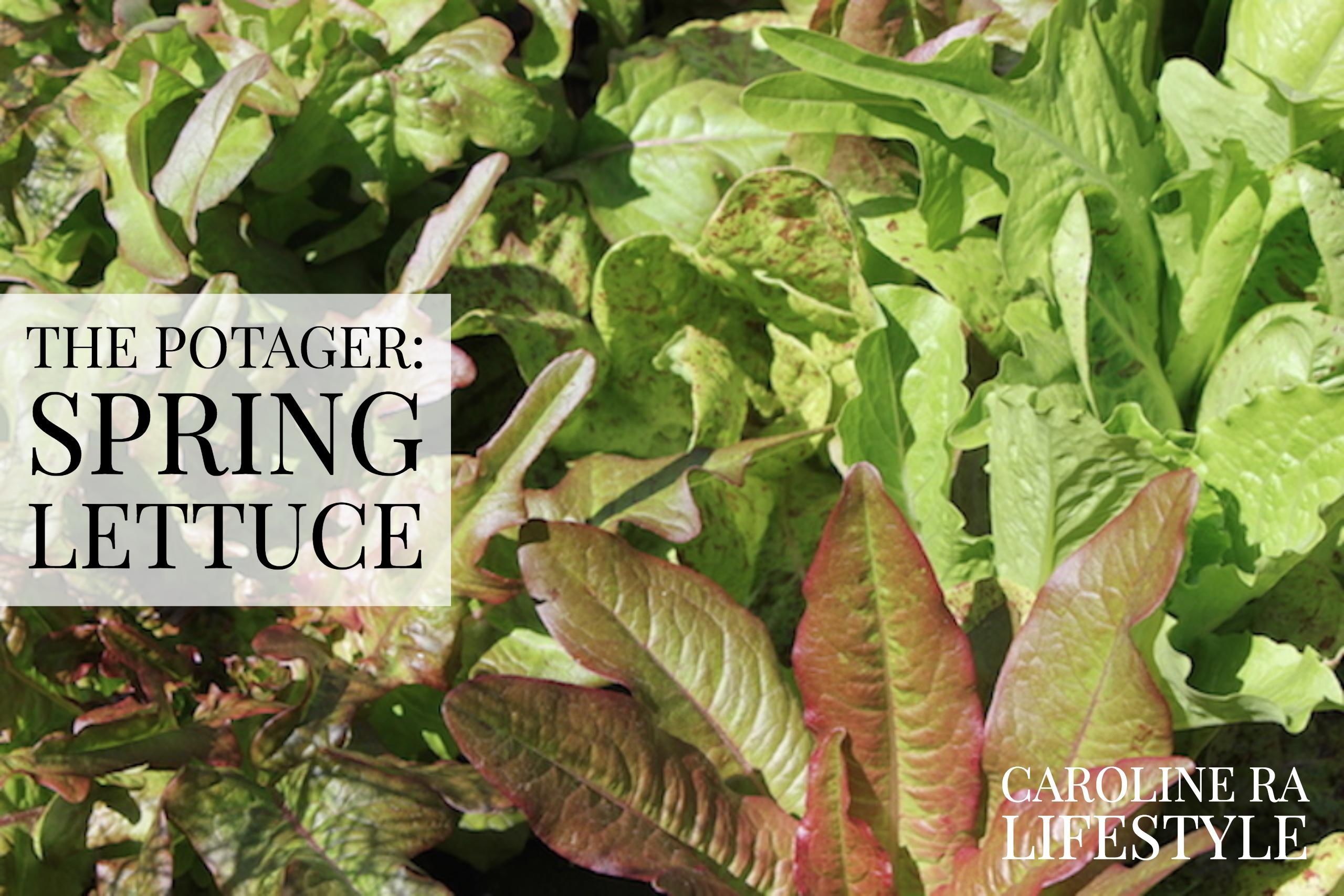The Potager: Spring Lettuce