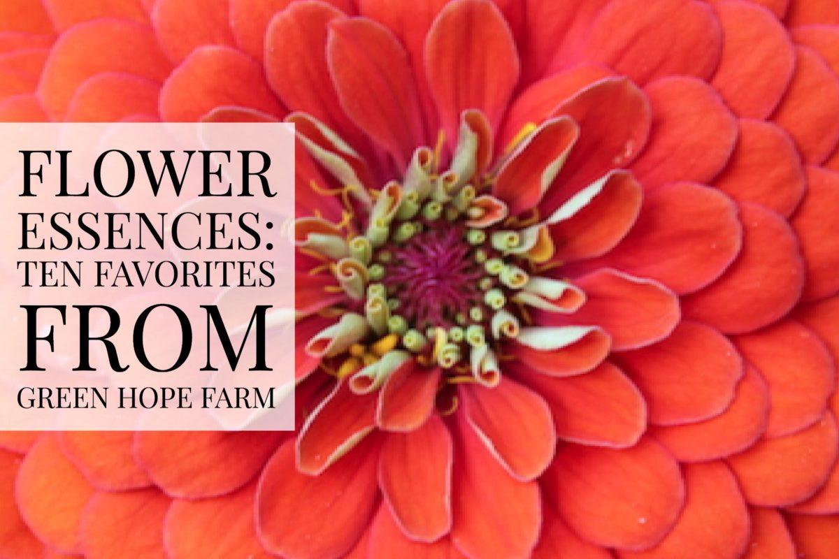 Flowers Essences: Ten Favorites from Green Hope Farm