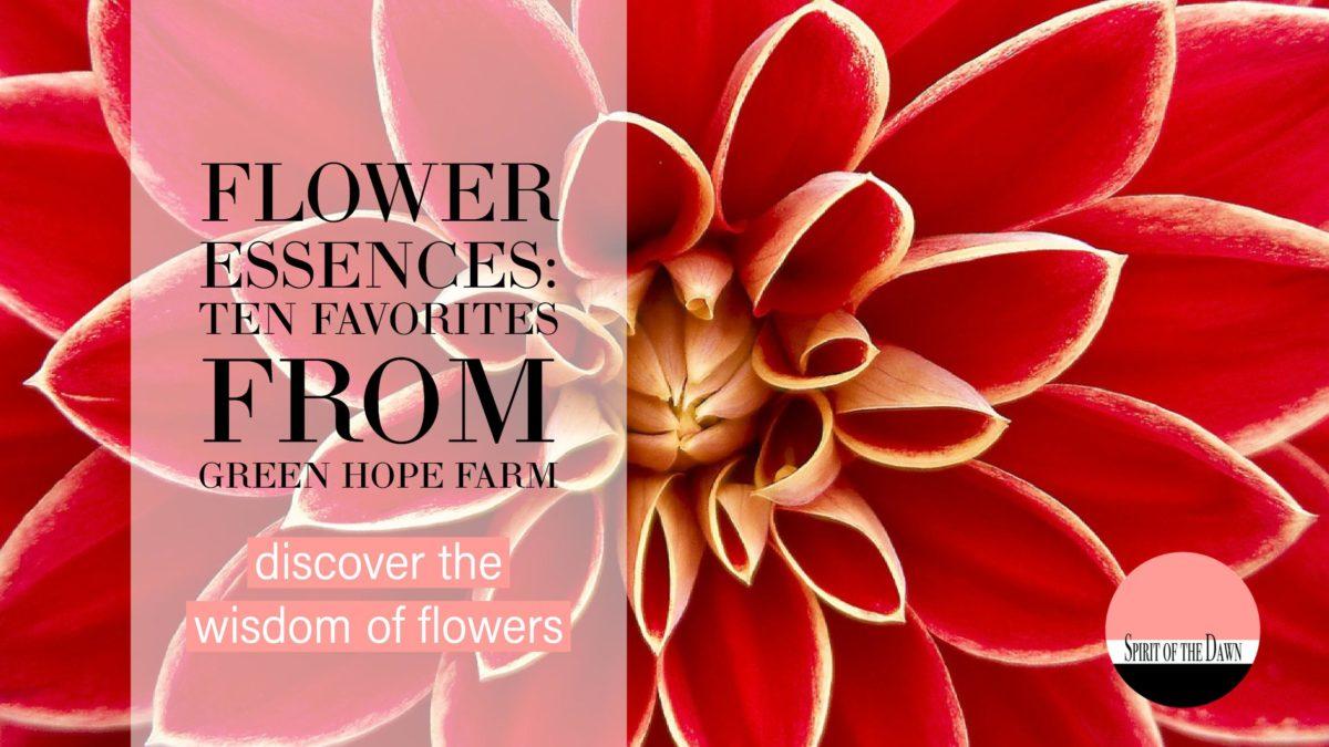 Flower Essences: Ten Favorites from Green Hope Farm